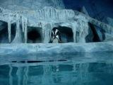 Как размножаются пингвины)))